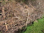 Dead hedge