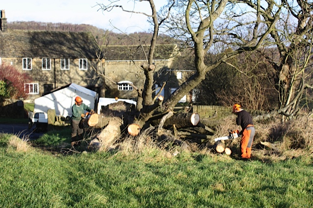 "Removal of the remains of the Old Horse Chestnut from ""Front of the Yard"" Field December 2012"
