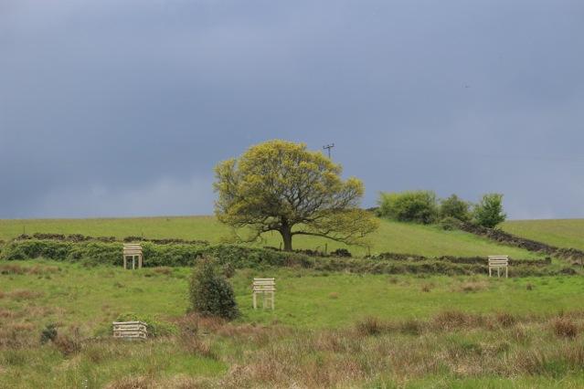 Sessile Oak on Swinnock Lane