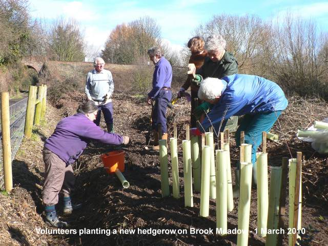 0-0-0-wx542-hedgerow-planting-bm-01-03-10