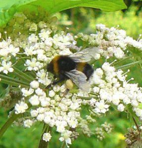 0-0-0-wx738-bumblebee-angelica-18.08.16