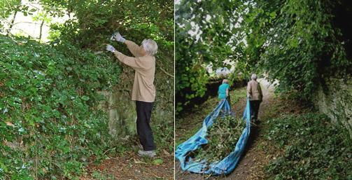 churchyard-ivy-clearance-w