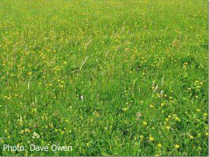 Cowslip-Meadow2