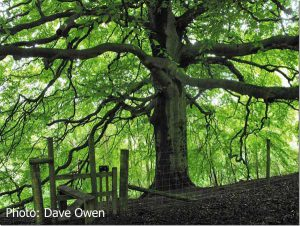 Impressive-boundary-tree