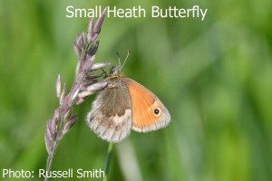 Small-Heath-LH