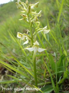 orchid-june-2016-2