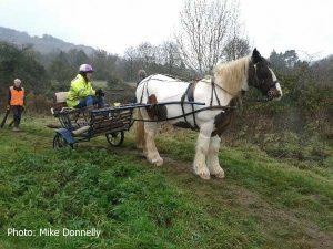 20161127_100924_horse