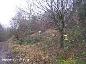img_8355-ash-saplings