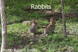 Rabbits_DSC_0012