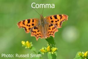 Comma_DSC_1150