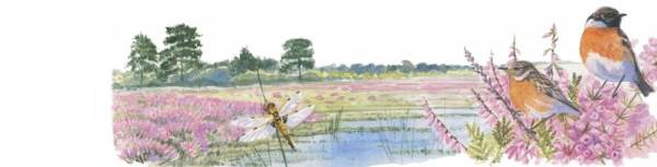 Artist's impression of Stoke Common