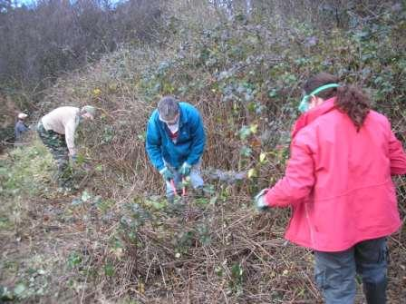 HGG members cutting brambles