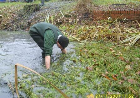 Wading in pond to collect weed by hand