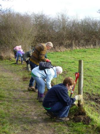 hedgeplanting - Jan 2011