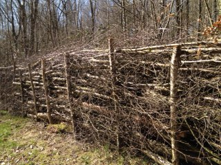 Dead hedge at Owlbeech Wood