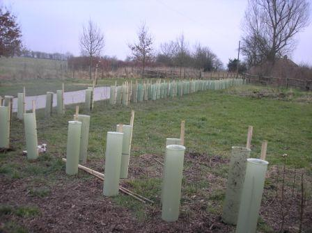 newly planted hedge at Chesworth in Feb 2008
