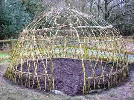 living willow dome in 2010