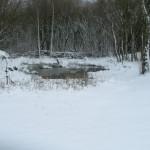 Pond area 23-03-2013