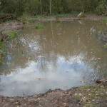 Pond_full_10-11-2010