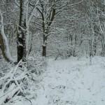 Woodland snow #6 23-03-2013