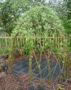 willowdome