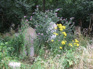 nature reserve flowers and gravestone