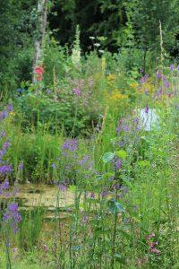 Wildlife garden and pond through summer foliage