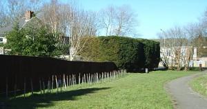 Penjar hedge 170213 2
