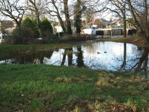 Privett Rd Pond 2 130113