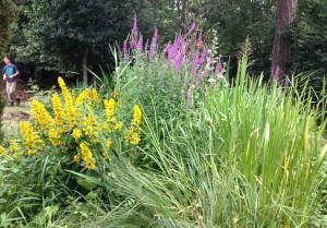 Bog Garden 2015