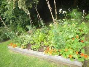 Veg bed after