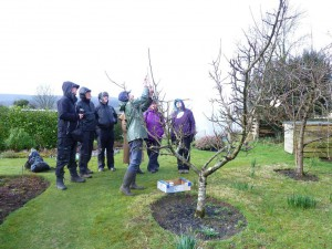Apple Tree Pruning and Andrew's Bday 15 001