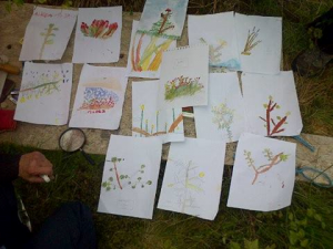 Children's watercolours of plants on site