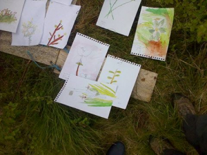 More children's watercolours of plants on site