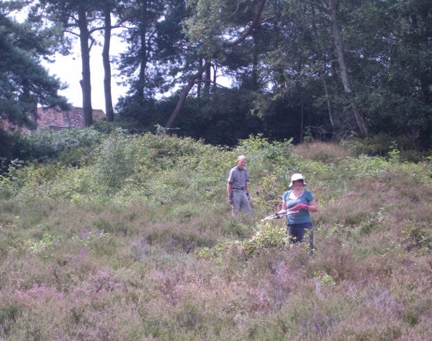 Clearing shrubs and saplings on the dry heath