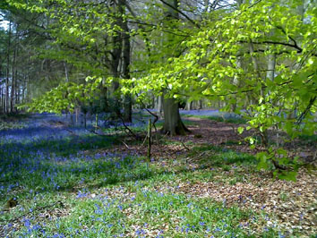 Flowercroft Woods (Woodland Trust)