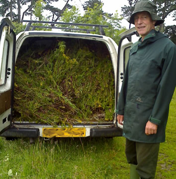 Van full of ragwort