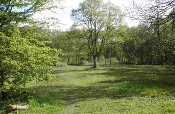 Moorend Common