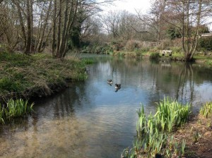 Storrington Mill Pond