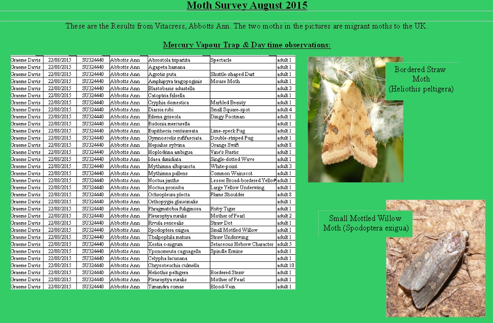 August Moth survey 2015.vitacress