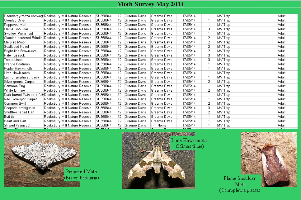MothsurveyRooks2014