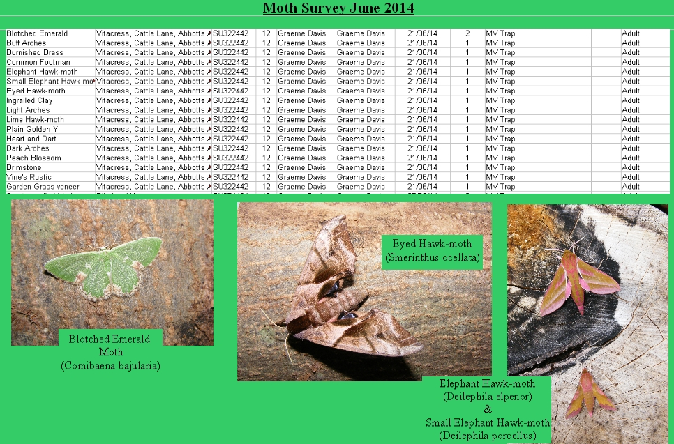 MothsurveyVitacress2014