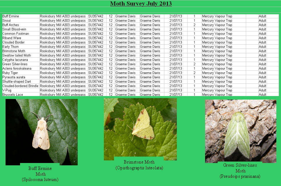Mothsurveyrooks2013