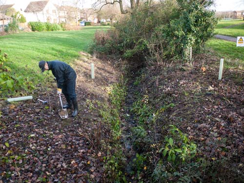 Kevin planting trees where brambles once dominated
