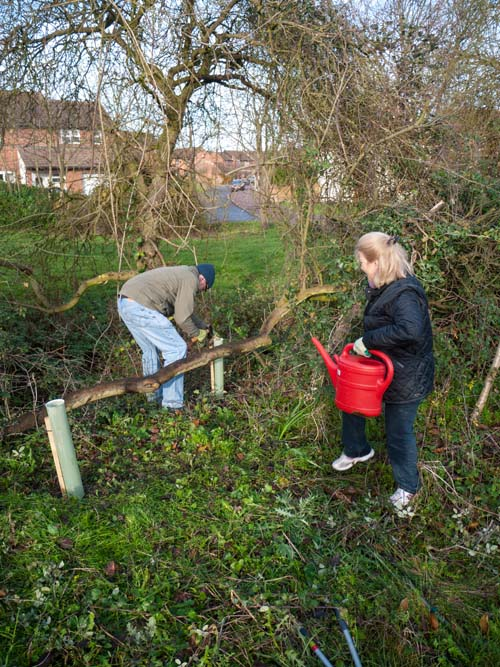 Planting in a gap in the hedgerow (Ken and Lydia)