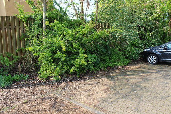 Before – overgrown edge to the turning area