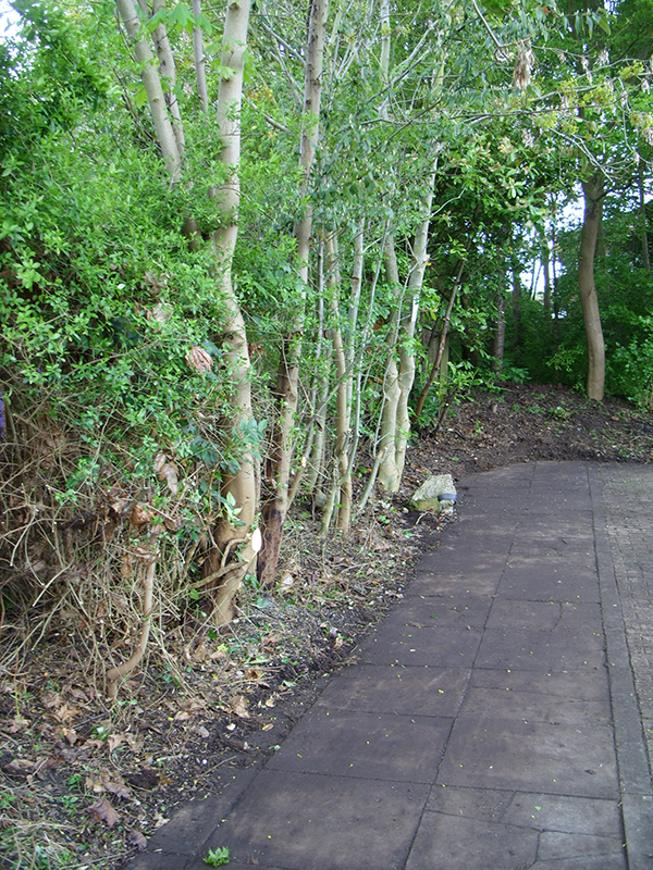 After cutting back – a new edge and a rediscovered section of footpath