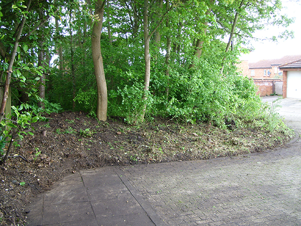 After – a tidier edge to lovely local woodland