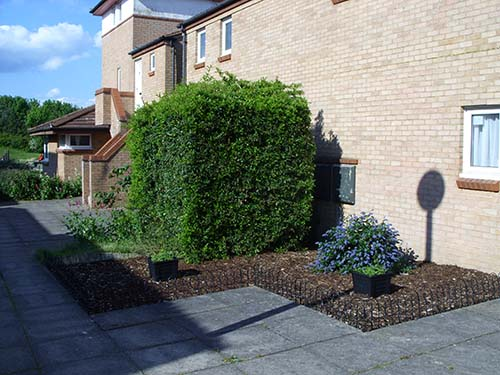 One of the front gardens, tidied and planted up by the new occupants