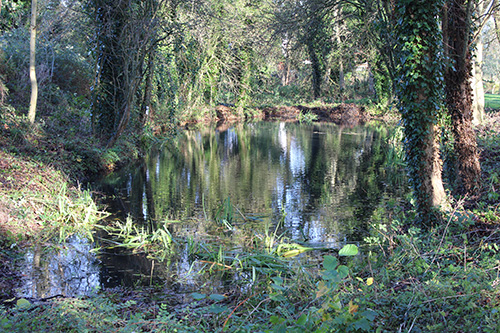 Stone Hill Pond after our maintenance work this autumn. This landmark feature within Two Mile Ash looks different every day; the mirror like effect here is one of its many moods.